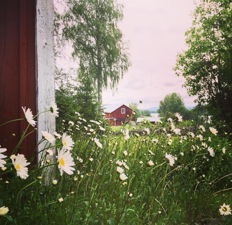 blommor knuten